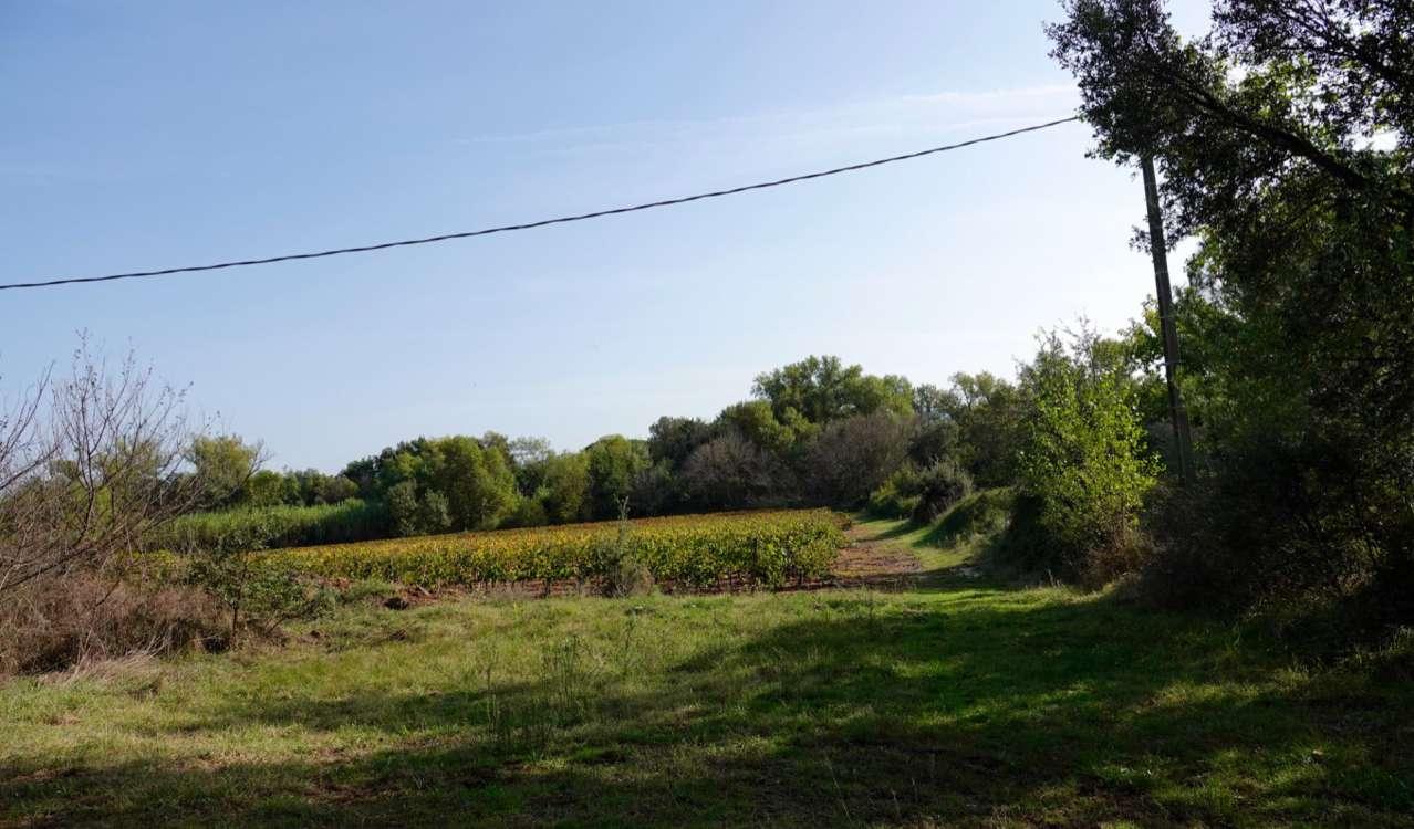 Продажа Винодельческое поместье Le Cannet-des-Maures